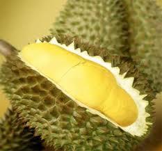 jual-lempuk-durian-asli-oleh-oleh-khas-bengkullu